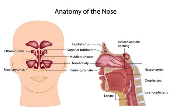 Nasal Sinus Doctors Philedelphia Pa Sinusitis Treatment